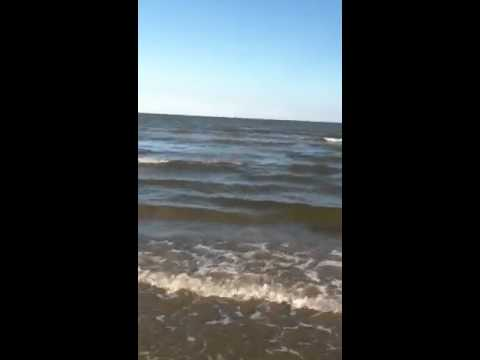Man eating shark caught from Galveston beach! - YouTube
