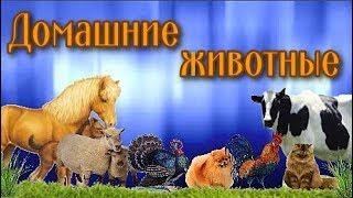 Домашние животные Детям о животных