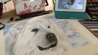 Drawing Pyrless the Great Pyrenees Mountain Dog
