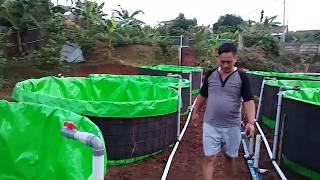vuclip Cara dan biaya membuat kolam terpal bulat yang praktis dengan sistem pembuangan air
