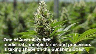 Sunshine Coast Medicinal Cannabis Farm Taking Shape