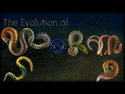 The Evolution Of Worms 🦠
