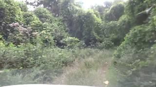 妻女山へ通ずる林道