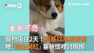 柯基犬住寵物店2天 以為被棄養 哭紅眼 窩狗爸懷裡討抱抱|寵物|狗狗