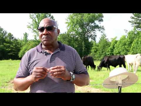 Forest, Mississippi Farmer Trades Glass Industry for Cattle Farming