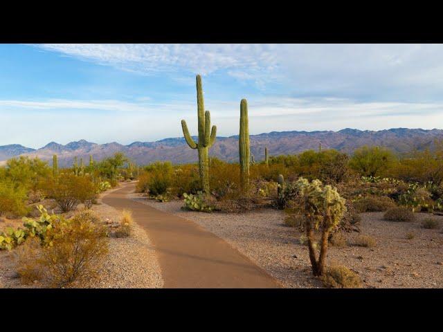 AIMER AVANCER, E005, 2 mots magiques - histoire - - Cactus/Mousse
