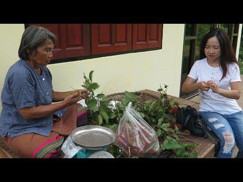 laos travel , rambutan farm