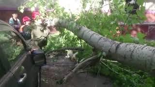 Дерево упало на внедорожник