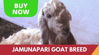 Jamunapari  Goat, Thiruvananthapuram, Kerala | India Video