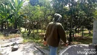 Keindahan Alam Mahapraja , Peninjoan Bangli