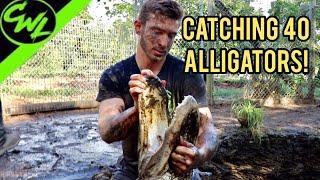 catching-40-alligators