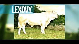 Lexovy - Un phénomène pour le renouvellement