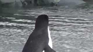 Антарктика. ч.2 Животный мир