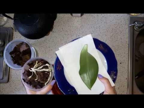 Часть 12. Реанимация. Орхидея Фаленопсис. Посадка корней орхидеи без листьев. Что делать дальше.
