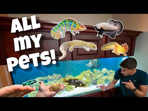 ALL My EXOTIC ANIMALS In One Video!!