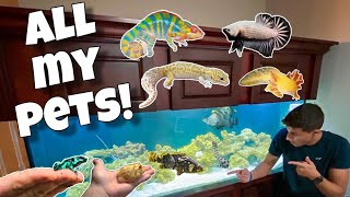 all-my-exotic-animals-in-one-video
