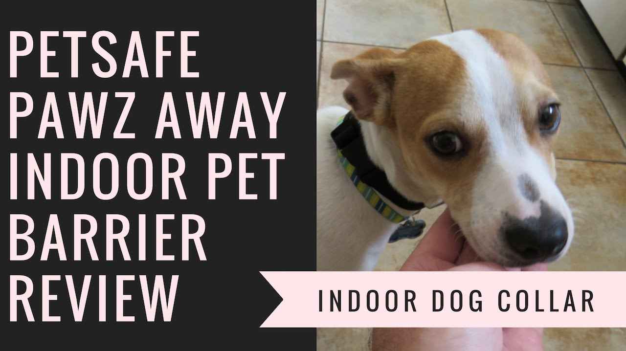PetSafe Pawz Away Indoor Pet Barrier Review - Indoor Dog Collar ...