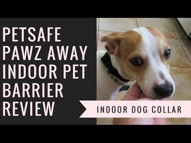 114e042efa6 11 Best Smart Dog Collars with Wi-Fi & GPS (2019) | Heavy.com