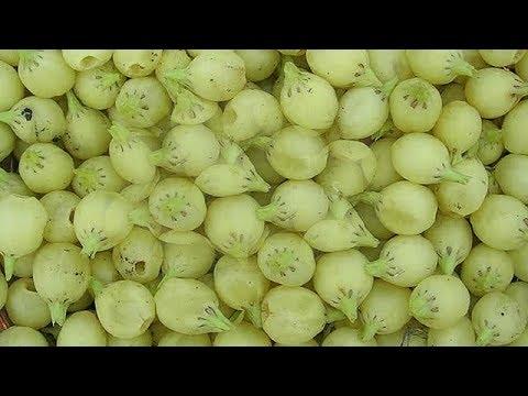 महुआ के ये फायदे आपको हैरान कर देंगे /health benefits of mahua