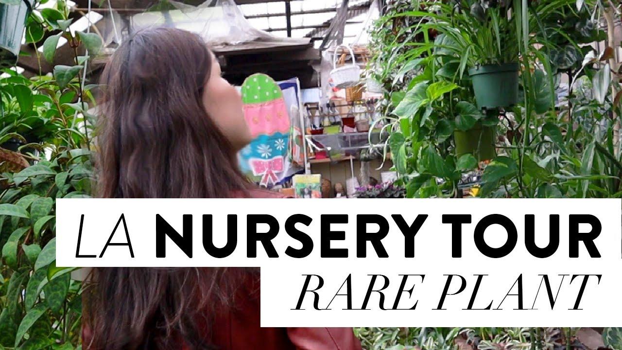 Rare Houseplant Ping Top Plant Nursery In Los Angeles San Gabriel
