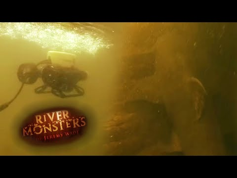 First Time In History That A Goonch Catfish Was Caught On Camera | CATFISH | River Monsters