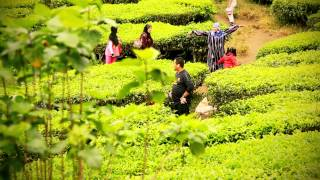 Cameron Highlands - Tea plantations and the Mossy Forrest