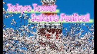 2019年春の東京タワーでは、恒例の「東京タワー桜フェス」を開催中です...