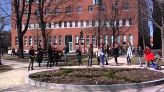 Les Petits violons jouent Le Petit Poulet - Flash mob