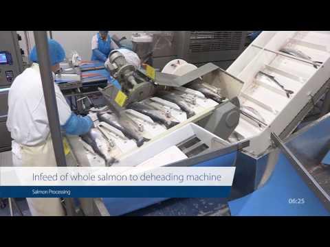 Case Study: Post Rigor Salmon Processing At Bremnes Seashore