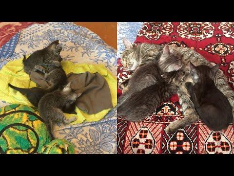Котята растут / Kittens Grow Up (Кото-влог - 20)