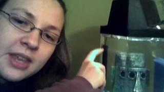 betta fish heater update