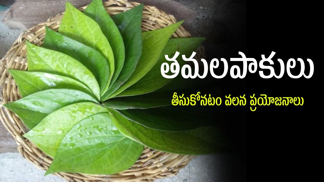 Discussion on this topic: 23 Amazing Medicinal Uses Of Betel Leaf , 23-amazing-medicinal-uses-of-betel-leaf/