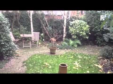 Vos in tuin Rotterdam-Blijdorp,Andrea van der Meide