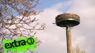 Realer Irrsinn: Storchennest ohne Baugenehmigung