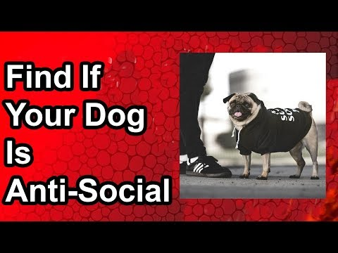 how-to-easily-find-if-your-dog-is-anti-social