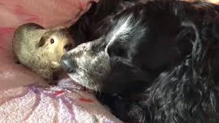 Смешная картинка из жизни домашних животных