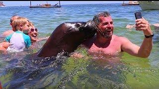 メキシコのビーチではアシカに「チュー」してもらえるそうな。嬉しそうな海水浴客たちをご覧ください