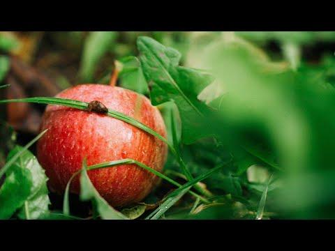 З любовю і добром — яблука від ТОВ «Федорівське»