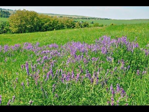 Лесные летние травы. Дикорастущие съедобные и лекарственные растения и грибы.