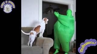 Собака Танцует С Хозяином | Мой Хозяин Идиот