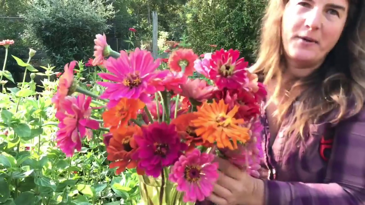 Cutting Zinnias For Bouquets Youtube