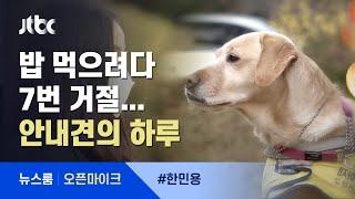 """[오픈마이크] 시각장애인 안내견의 하루…""""어딜 개가!"""" 밥 먹으려다 7번 거절 / JTBC 뉴스룸"""
