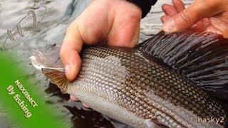 Нахлыст на Кольском (Fly fishing on the Kola Peninsula)