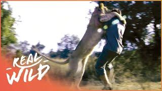 Attack By Predators Of The African Savanna! | Human Prey| Real Wild Documentary MP3