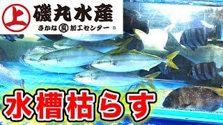 磯丸水産の魚を食って水槽を枯らす!!!