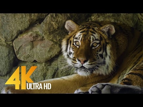 4K 60 fps - Animals in 4K - Kiev Zoo, Ukraine - Relax Video with Floating Music | Urban Life