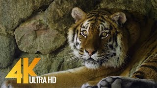 4K 60 fps - Animals in 4K -  Video with Floating Music | Urban Life