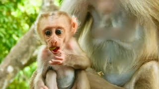 new update available baby Ronin find food with mom so lovely.