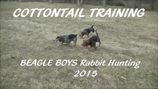 April Cottontail Training - 2015(beagle Boys Rabbit Hunting)
