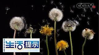 《生活提示》 20190823 夏秋交替 警惕花粉过敏  CCTV